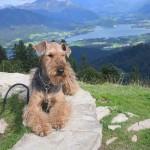 Onka vom Dippold (Oxi) mit Familie - Urlaubsgruß vom Wolfgangsee