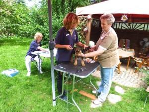 Auch as geht im Garten, die tierärztliche Untersuchung der Welpen mit dem Impfen und Chipen - beide Ärztinnen im Einsatz.