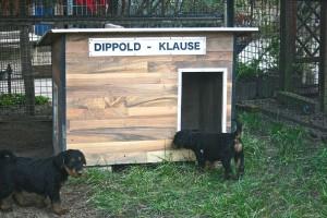 Wenn die Welpen dann müde und kaputt vom Spielen und Toben sind, ruhen sie sich in der Dippold-Klause aus.