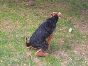 Der Rasen - alles kann man eben nicht haben! Wir haben die spielenden und glücklichen Hunde (dafür weniger schönen Rasen).