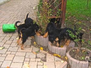 Und besonderen Spass haben die Welpen, wenn sie im Garten bei der Arbeit mithelfen können.