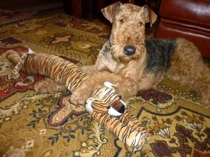 Der Teppich ist manchmal die grosse Spielwiese. Hier sieht man dann, mitten in der Familie, den glücklichen Hund.