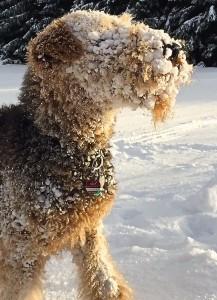 Das ist Cora, der Schneehund, es kann gar nicht toll genug sein.