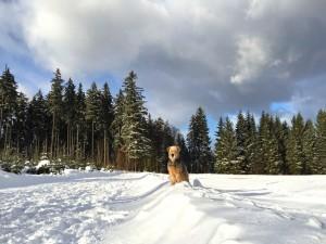 Das ist ein herrliches Bild. Schnee, Wald, Hund und eine riesige Schneewolke darüber.
