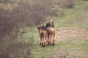 Das ist doch ein herrliches Bild, da gehen die beiden nun friedlich spazieren, was sie sich bloss erzählen, es scheint sehr spannend zu sein!
