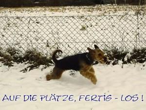 Sprinttraining auf der Hundewiese - sicher und mit Kumpels besonders schön.