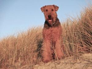 Und dann gab es auch Tage, an denen Die Sonne schien und der Eindruck vom Strand in den Dünen war bald wie Sommer!