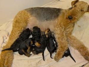 Und Mutter Nessy versorgt ihre Kinder herrlich, passt aber auf alles auf (eben Mutter !).
