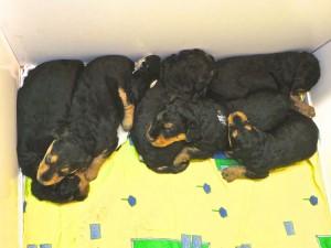 So liegen diese Typen jetzt in ihrer geliebten Wurfkiste, beim Schlaf, eng geschmiegt.
