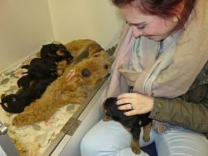 Enkeltochter Antonia ist begeistert, der Welpe auch und die Hundemutter erst recht.