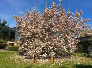 Dieser herrliche Frühlingsgruss aus Blumenberg bei Magdeburg - vielen Dank!