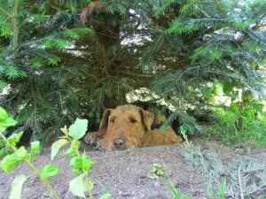 Tami in ihrem geliebten Garten - es war so sehr heiss, also bitte Verständnis.