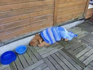Und wieder im Garten, man schaffte Abhilfe gegen Hitze, und Tami gefiel es sehr.