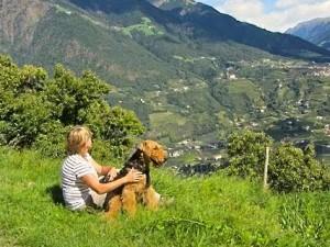 Hier sieht man die herrliche Landschaft in Südtirol, beide geniessen die Ruhe.