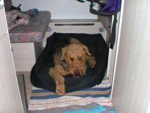 Theo im Caravan - sein Schlafplatz und auf der Reise zur Insel Usedom.