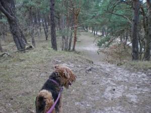 Ja, das sind sie, die herrlichen Wälder auf der Insel Usedom, richtig für den Freiläufer Theo.
