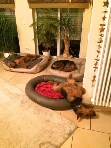 Und zu Hause angekommen ergab sich folgendes Bild der GROSSEN HARMONIE - alle 3 schliefen entspannt und fest.