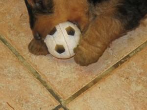 Das gibt es nicht, das ist der Fussballer. Er braucht den Ball nur sehen, und drauf und fort.