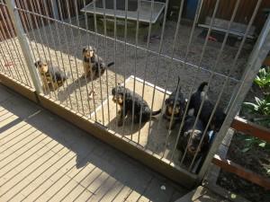 Hier sitzen die Typen, haben Spielzeug, viel zu sehen und zu hören, auch die grossen Hunde.
