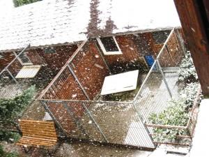 Hier sieht man so richtig, wie es schneit, und da unten ist der Nessy-Zwinger mit den Y-Kindern.