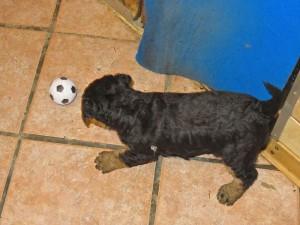 Ball, Ball - das gibt es nicht, schon in dem Alter, und dann noch die Kleinste!