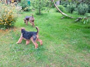 Cati und unsere Nessy durchstöbern den Garten und vertragen sich sehr gut.