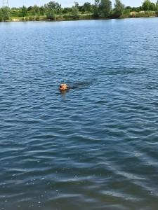 Im Baggersee in Dresden. Nun schwimmt sie wieder, mit Freude, das ist gut.