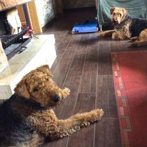 Sheriff und Stella zusammen im Wohnzimmer der Familie,  gleiche Frisur zufällig, wer ist wer?