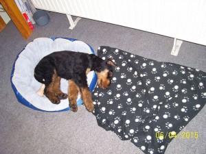 Und das Schlafen geht zu Hause auch sehr gut. Der ganze Kerl auf dem Kettchen, der Kopf aber bitte etwas besser auf der Decke.