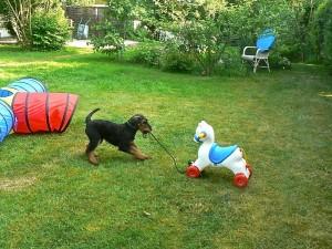 Und jetzt geht's los, durch den Garten am anderen Spielzeug vorbei.