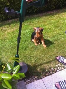 Extrem fleissig ist er auch bei der Gartenarbeit und erholt sich hier gerade mal.