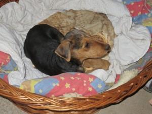 Ganz brav und lieb hat Ysco im Körbchen fast die ganze Nacht über geschlafen - toll.