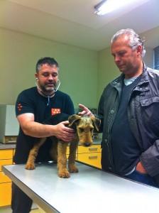 Beim Tierarzt - es muss sein, also gut. Papi ist ja dabei (er scheint da mehr zu leiden) !