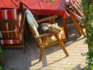 Das müsste doch unbequem, sein, der Stuhl viel zu klein, die harte Holzlehne - nein, sie muss IHREN Platz schon besetzen.