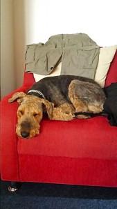 Livi ist ein richtiger Familienhund, der Opa der Familie ist ihr Freund und zu Hause ist es am schönsten.