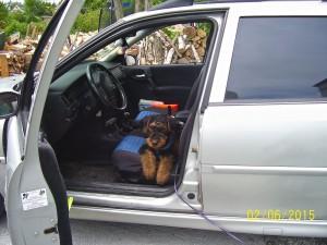 Hier ist Yasko erst mal eingestiegen - ob er bequemer warten will oder eventuell selbst fahren ??