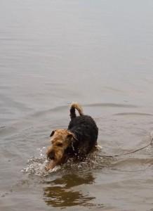 Also hier gibt es erst mal viel Wasser auch ungestört für Hunde.