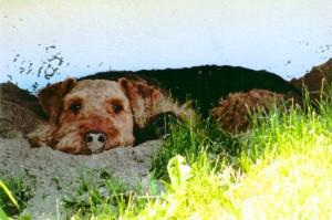 Strand, Ostsee, ausruhen, die Nase voll Sand - so hält es (sogar) ein Hund aus.