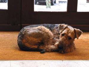 Ruhe für das weitere Leben, das wird sich Whisky dringend wünschen, ein Zu Hause, wo er bleiben kann.