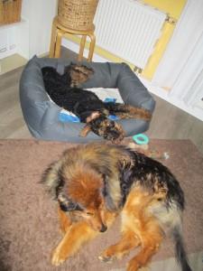 Und hier sieht man, Yasko und Kumpel schlafen friedlich nebeneinander - das ist sehr gut so.