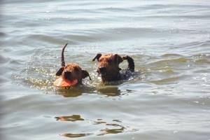 Hier die beiden Typen im Wasser - rechts ist Ivo.