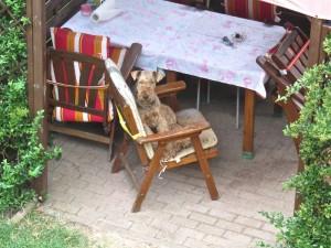 So sitzt Nessy nun und wartet, bis jemand kommt, beobachtet, was herum geschieht - ist scheinbar sehr glücklich.