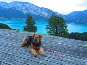 Sehr schön getroffen, so eine richtige Urlaubsidylle, unsere Pia mit Familie in Österreich.