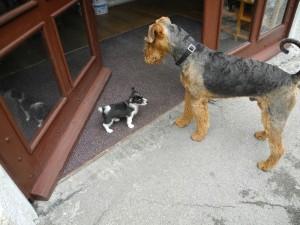 Zur Erinnerung - eine Eigenschaft von unserem Hund bei seiner Familie ist - er verträgt sich mit anderen Hunden sehr gut.