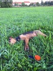 Nach langem Toben mit Spielzeug im nassen Gras morgens - kaputt!