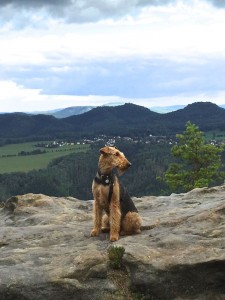 Herrlich, der Hund, die Landschaft - es strahlt so eine Ruhe aus.