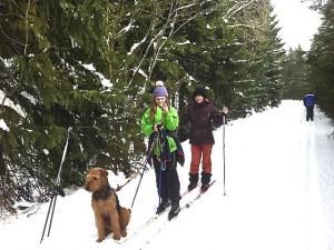 Rea mit Frauchen und Freunden beim Ski-Langlauf.