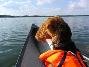 Rea beim Kanu-Urlaub mit Frauchen in Mecklenburg.