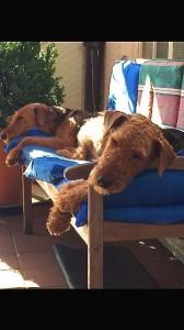 Und hier die Ruhe selbst, beide mit weichen Auflagen - so lässt es sich der Hund gefallen !!