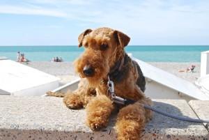 Und ganz genüsslich auf der Mauer der Strandpromenade mit bester Aussicht auf Menschen und Meer!